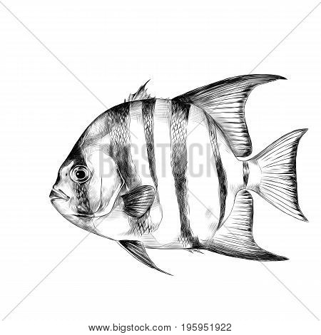 Atlantic fish-shovel sketch vector graphics black and white drawing