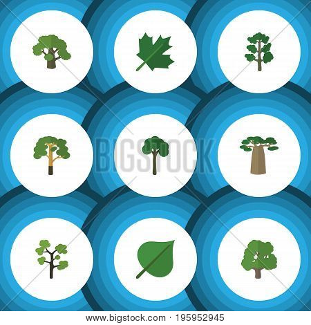 Flat Icon Natural Set Of Wood, Evergreen, Garden And Other Vector Objects