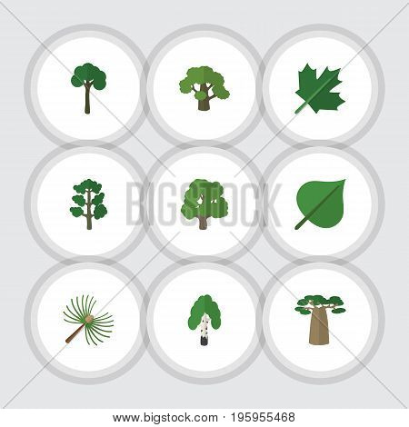 Flat Icon Ecology Set Of Timber, Rosemary, Hickory And Other Vector Objects