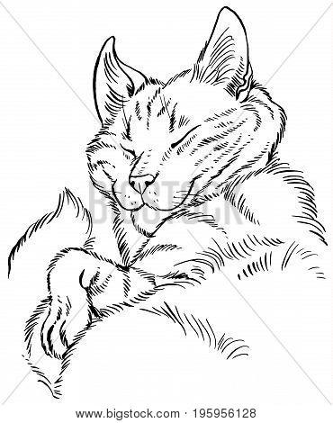 Fluffy cat comfortably sleeps - vector illustration