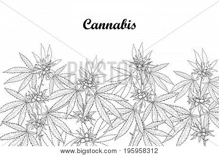 Vector field with outline Cannabis sativa or Cannabis indica or Marijuana. Branch, leaves and seed isolated on white background. Medicinal plant in contour style for summer design and coloring book.