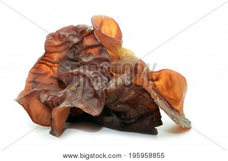 Closeup Photo Of Black Fungus