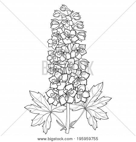Vector bunch with Delphinium or Larkspur. Flower, stem, bud and leaf in black isolated on white background. Floral details in contour style with ornate Delphinium for summer design and coloring page.