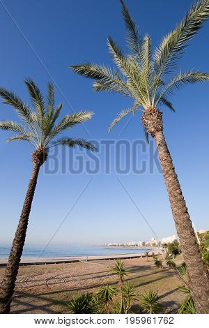 Two Palm Trees In Beach Of Benicassim
