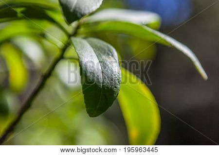Closeup of green leaf on beautifully blurred background with copy space