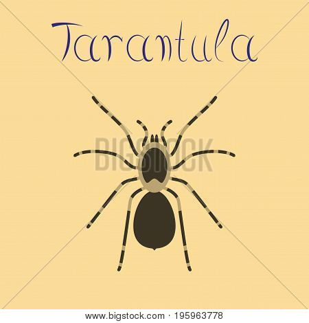 flat illustration on stylish background spider tarantula