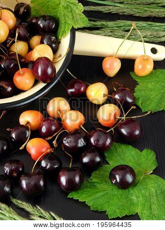 Two sorts of cherry are scattered on a dark table. Ruby and yellow cherries on a dark background