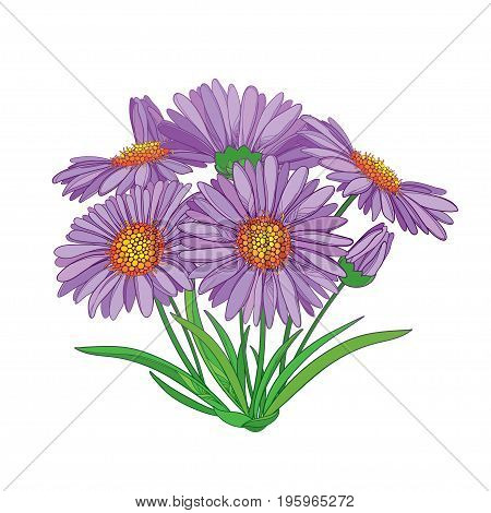 Vector bouquet with outline Alpine aster flower in purple, bud and green leaf isolated on white background. Ornamental Alpine mountain flower in contour style for summer design.