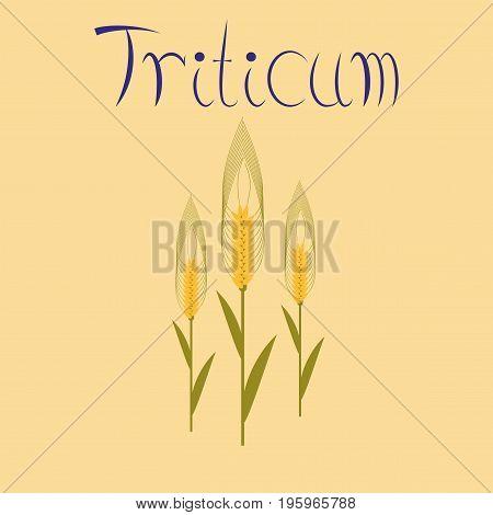 flat illustration on stylish background natural triticum