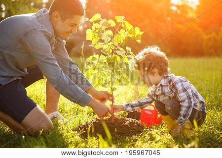 Boy and man both wearing shirt planting tree seedling in park.