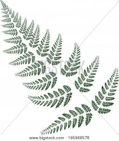 Green fern leaves on white background. Vector illustration