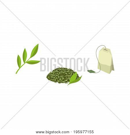 Vector green tea bag, leaf tea and tea branch flat set. Isolated illustration on a white background. Cartoon herbal tea set. Healthy beverage, lifestyle concept