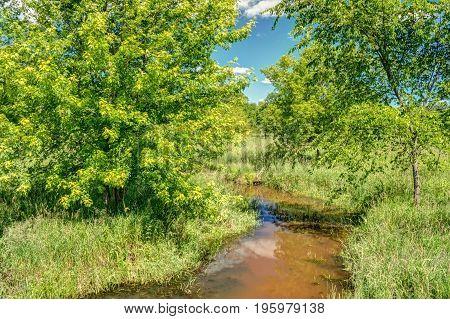 Muddy Stream In Forest