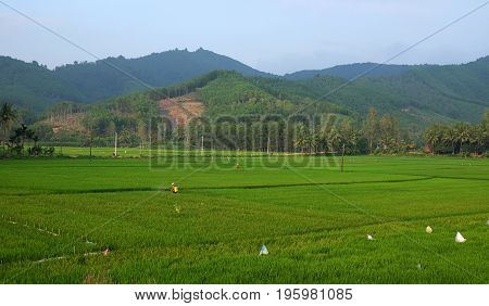 Asian Farmer Spraying Insecticide