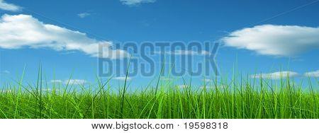 Green grass over a blue sky background