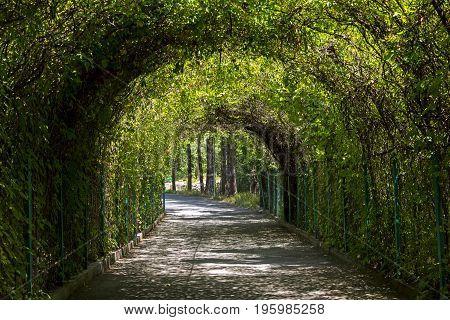 Green tunnel in the botanical garden of Yerevan,Armenia.
