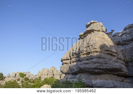 Wild goat on the rocks of La Sierra Del Torcal de Antequera National Park Malaga Spain. Morning moon over blue sky