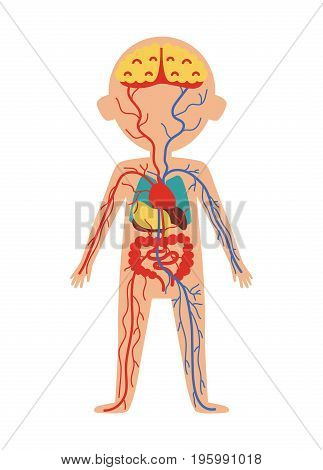 Boy body anatomy with internal organs. Health medical icon, human body physiology isolated on white background vector illustration.