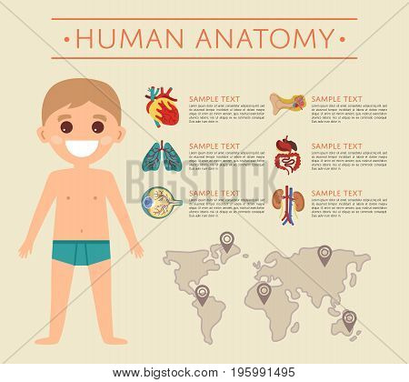Human body anatomy poster with smiling kid. Kidney, lung, eye, ear, heart, stomach, intestine medical vector illustration. Internal organs of boy, human body physiology systems infographics.