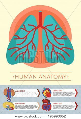 Human anatomy medical poster with internal organs. Kidney, lung, liver, heart, stomach, brain, intestine vector illustration. Human body physiology systems, healthcare infographics.