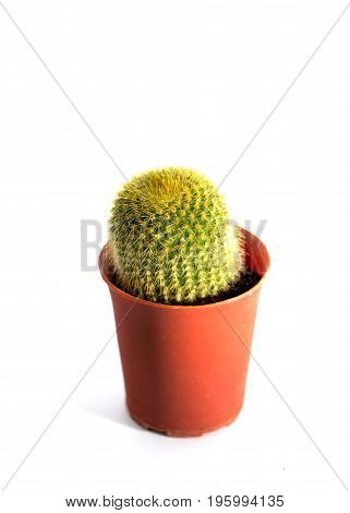 Close up cactus in red pot isolated on white background