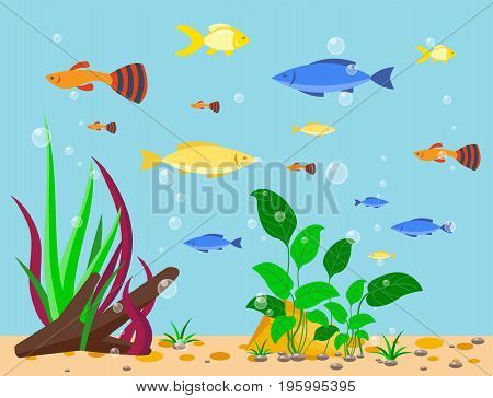 Transparent aquarium sea aquatic background vector illustration underwater fish tank bowl habitat house. Tropical sea aquatic cartoon water tank freshwater glass fishbowl algae plants.