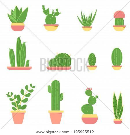 Flat Vector Illustration Of Cacti And Succulents In Pots. Set Of Cactus Isolated On White Background