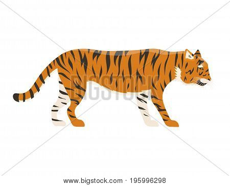 Tiger action wildlife animal danger mammal fur wild bengal wildcat character vector illustration. Safari striped carnivore aggressive anger orange jungle feline.