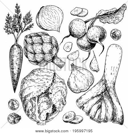 Vector hand drawn set of farm vegetables. Isolated carrot, articoke, leek, radish, cabbage, garlic. Engraved art. Organic sketched objects. restaurant, menu grocery market store party meal