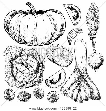 Vector hand drawn set of farm vegetables. Isolated pumpkin, cabbage, brussels sprout, leek, tomato, onion, radish. Engraved art. Organic sketched objects. restaurant, menu grocery market store party