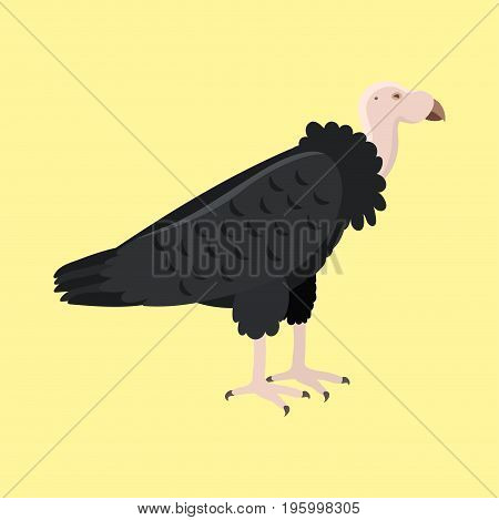 Andean condor vultur gryphus animal largest flying bird in griffon world wildlife nature canyon predator america colca character vector illustration. Natural freedom valley beak portrait.