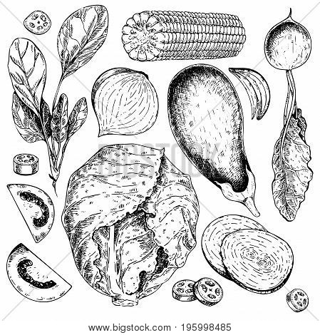 Vector hand drawn set of farm vegetables. Isolated spinach, cabbage, tomato, eggplant, radish, onion, jalapeno.. Engraved art. Organic sketched objects. restaurant menu grocery market store party meal