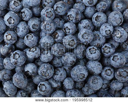 Background Of Fresh Washed Blueberries Close Up