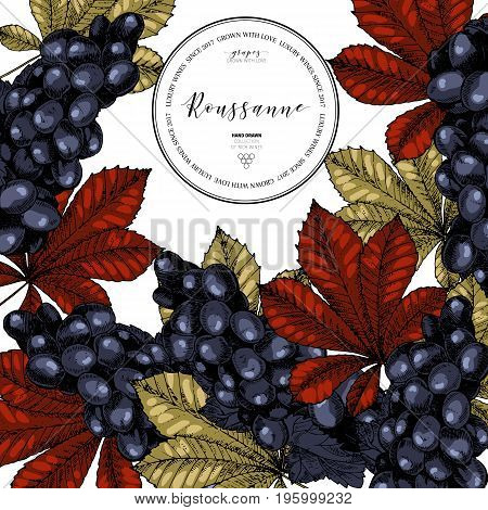 Vector design template of wine branding. Hand drawn. Colored grape and leaves. Luxury wines. Frame composition. Engraved art. Use for restaurant, menu, packaging, brand, store, wineyard flyer