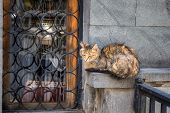 Undomestic cat sleeping on streets of Tbilisi, Georgia. poster