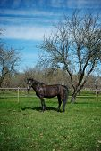 Beautiful black horse outdoor poster