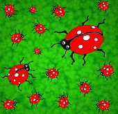 Family of ladybirds on a green lawn - graphic illustration. poster