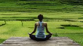 Young woman practicing yoga during luxury yoga retreat in Asia Bali meditation relaxation getting fit enlightening green grass jungle backgroundTerraced rice field in rice season in Vietnam poster