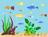 Transparent aquarium sea aquatic background vector illustration underwater fish tank bowl habitat house. Tropical sea aquatic cartoon water tank freshwater glass fishbowl algae plants. poster