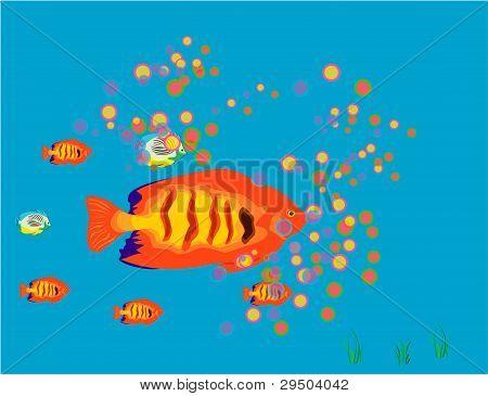 Fish background.