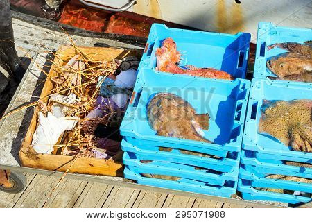 Catch Sea Lobster, Redfish, Stingray And Monkfish