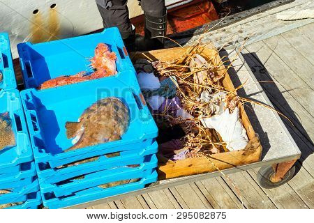 Catch Sea Lobster, Redfish And Monkfish, Blanes