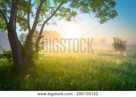 Spring Or Summer Landscape. Green Nature Concept. Nature Background. Morning With Mist Over Green Fi