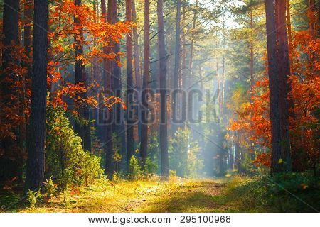 Picturesque Autumn Forest. Fall Forest. Autumn Landscape With Vivid Colors. Autumn Trees With Red Or