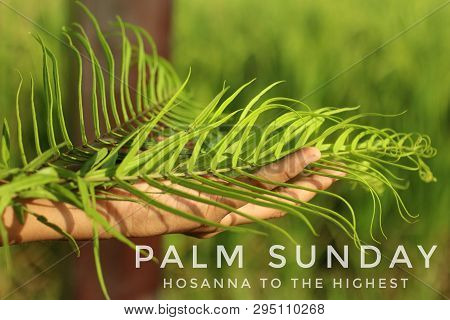Palm Leaves In Hand. A Young Woman Holding Palm Leaves. Palm Leaves Background. Palm Sunday Concept.