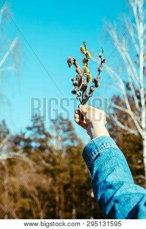 Spring Flowers In Woman Hand. Blue Sky On Background