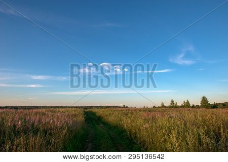 Field Grass Trail. Field Grass Trail On Colorful Background. Natural Green Grass Field Background. G