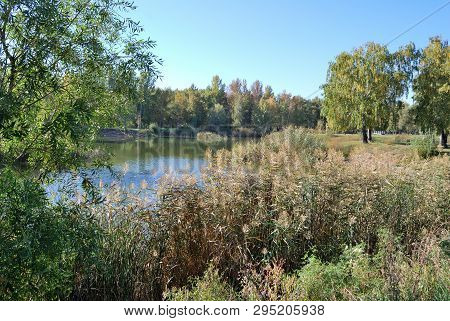 Autumn In Siberian Forest, Omsk Region, Russia