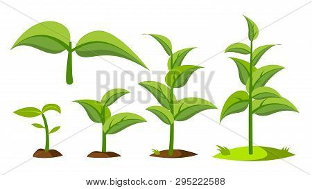 Saplings, Sprouts Growth Stages Vector Drawings Set. Green Saplings Growing In Soil Isolated Clipart