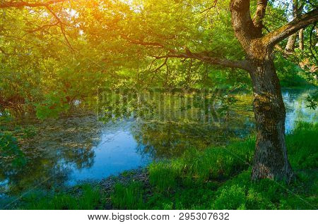 Summer forest landscape - forest deciduous oak tree on the bank of the river in sunny morning, sunny forest nature background. Colorful forest landscape with forest trees in the morning